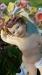 03-051 cherub 3