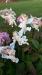 Cherub Angel Garden Stakes